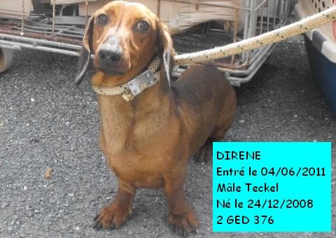 DIRENE Teckel 2GED376 Dirane10