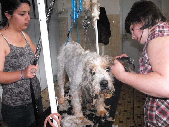 Visite de notre toiletteuse Jennifer Dscf2312