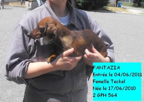 FANTAZIA Teckel 2GPH564 réservée Fantaz10