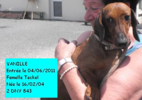 VANILLE Teckel 2DNY843 en CA le 19/06/11 Vanill10