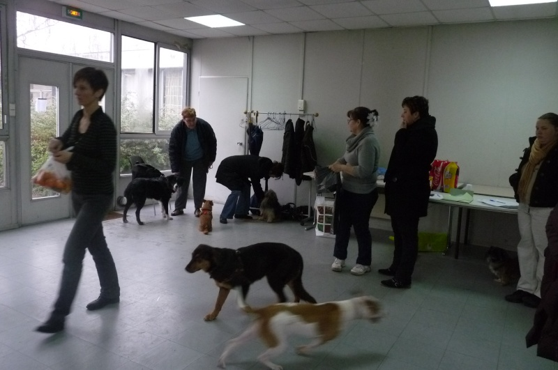 FORMATION CANINE DISPENSEE PAR CORINNE MARTIN - Page 2 P1210614