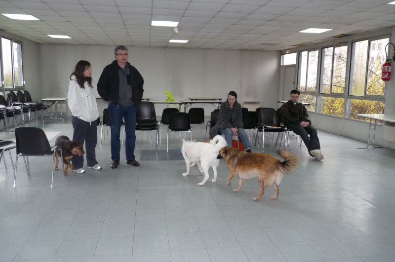 FORMATION CANINE DISPENSEE PAR CORINNE MARTIN - Page 2 P1210615