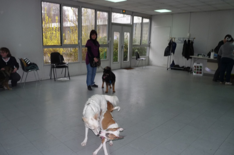FORMATION CANINE DISPENSEE PAR CORINNE MARTIN - Page 2 P1210616