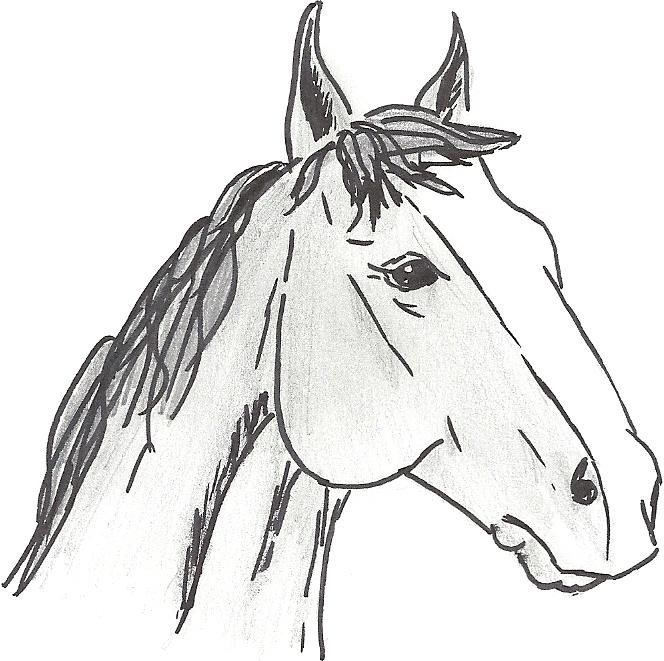 Concours dessins!  Numari10