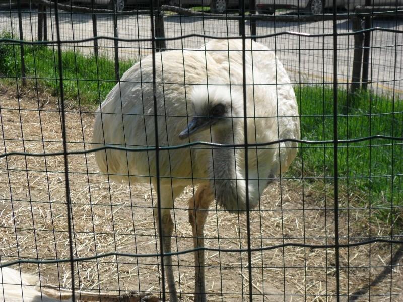 Photos d'un élevage en Italie. Italie12