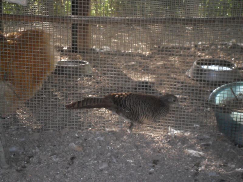 Photos d'un élevage en Italie. Italie16