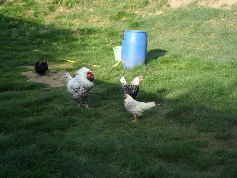 Photos d'un élevage en Italie. Italie21