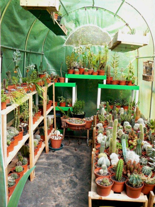 Mon garage a été vidé de mes cactus !!! P1190214
