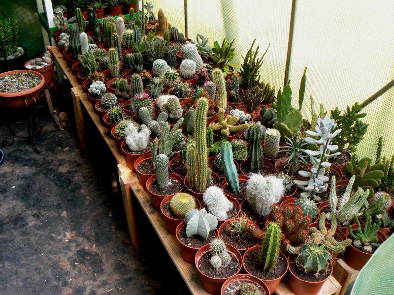 Mon garage a été vidé de mes cactus !!! P1190215