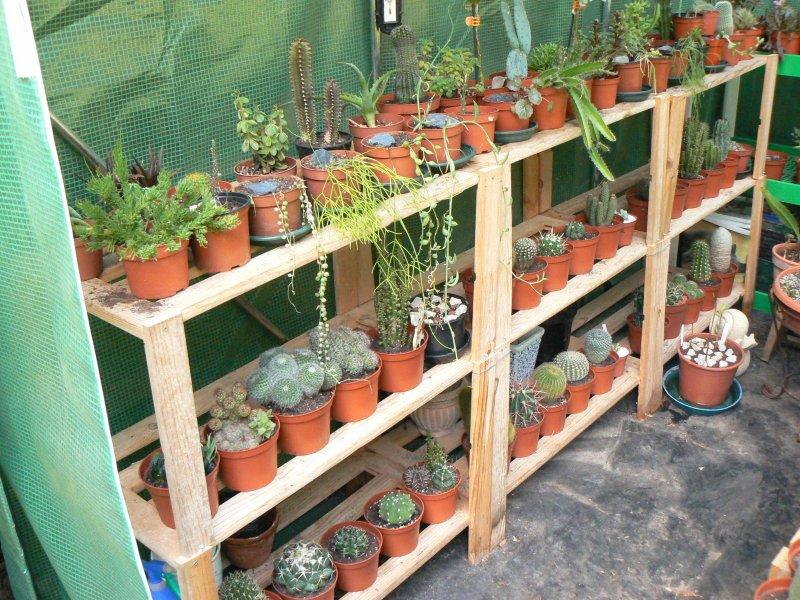 Mon garage a été vidé de mes cactus !!! P1190216