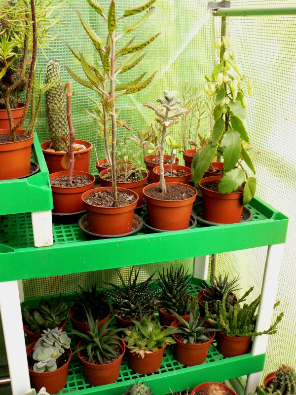 Mon garage a été vidé de mes cactus !!! P1190217