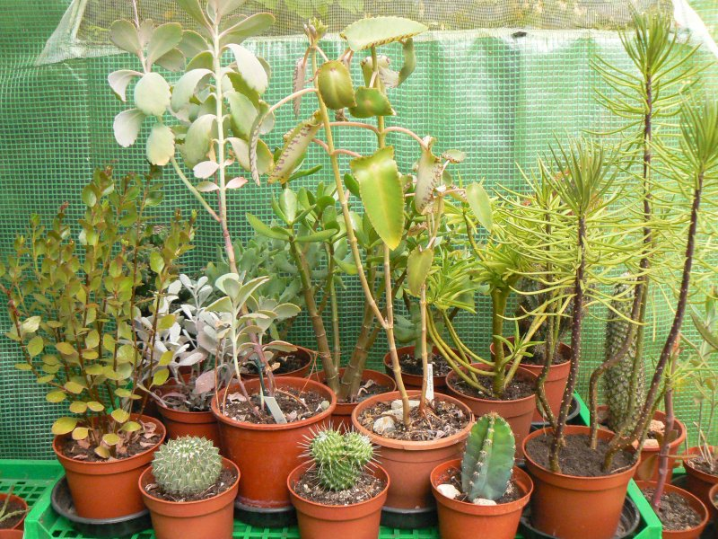 Mon garage a été vidé de mes cactus !!! P1190218