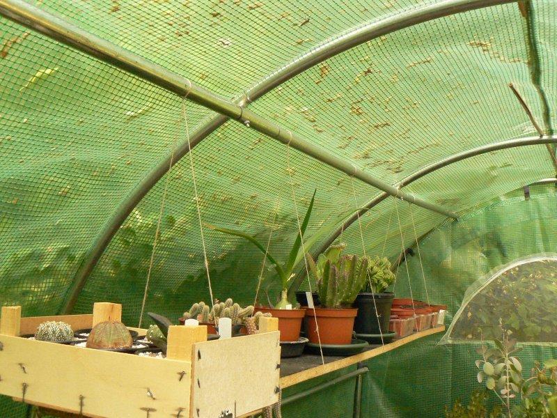 Mon garage a été vidé de mes cactus !!! P1190219