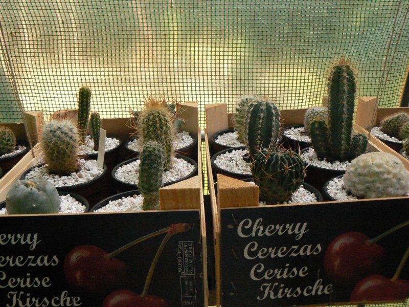 Mon garage a été vidé de mes cactus !!! P1190225