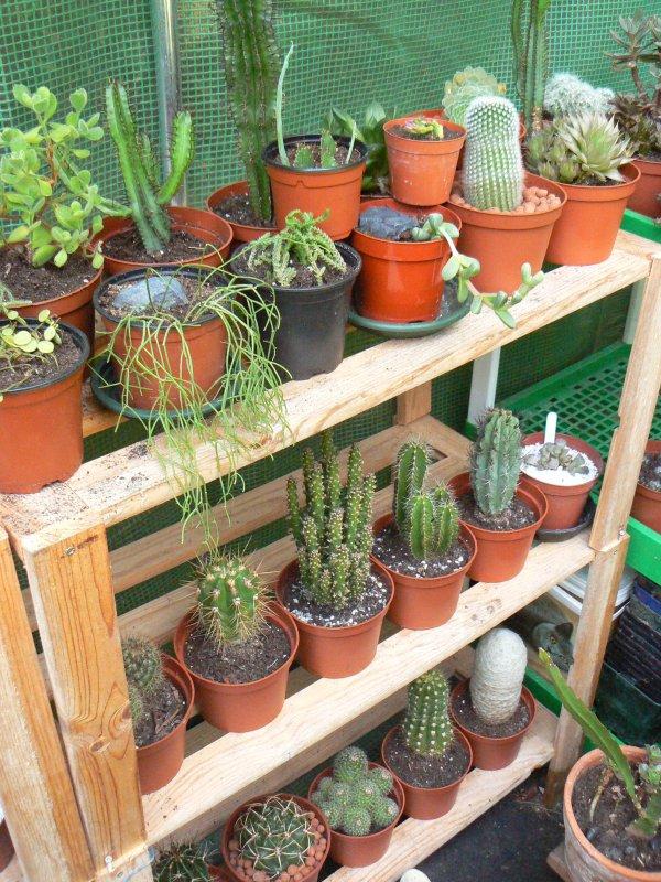 Mon garage a été vidé de mes cactus !!! P1190228