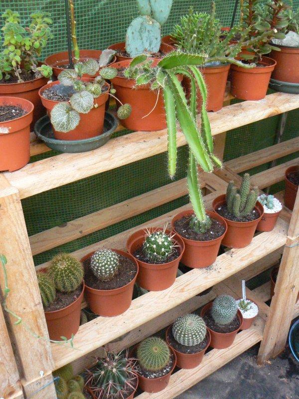 Mon garage a été vidé de mes cactus !!! P1190229