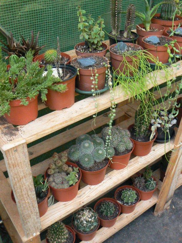 Mon garage a été vidé de mes cactus !!! P1190230