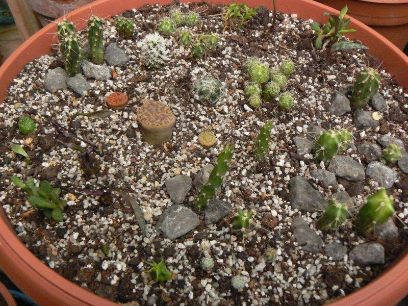 Mon garage a été vidé de mes cactus !!! P1190231