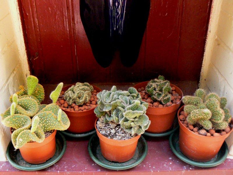 Mon garage a été vidé de mes cactus !!! P1190234