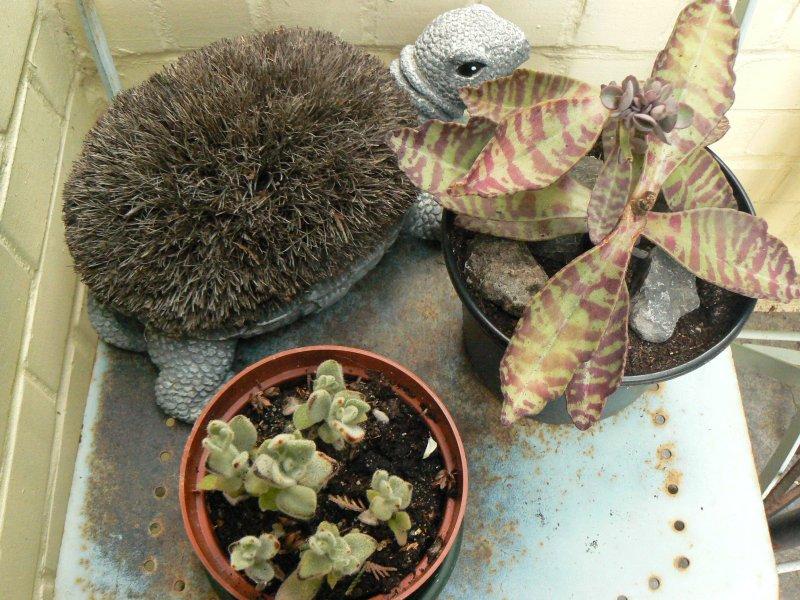 Mon garage a été vidé de mes cactus !!! P1190240