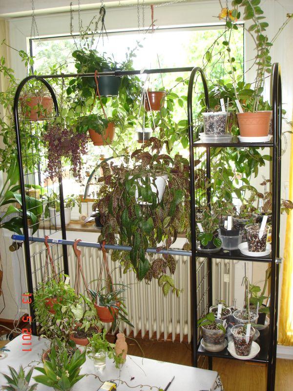 Ideen für Platzprobleme Blumen11