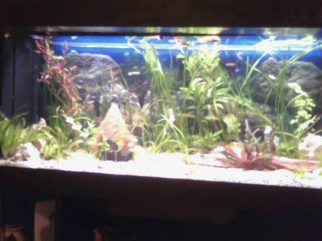 mon 250l pour petit poisson 2011-010