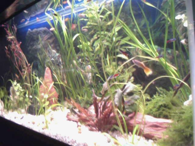 mon 250l pour petit poisson 2011-011