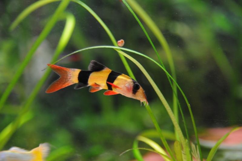 mon 250l pour petit poisson Dsc_7610