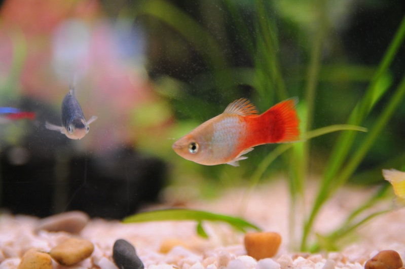 mon 250l pour petit poisson Dsc_7612