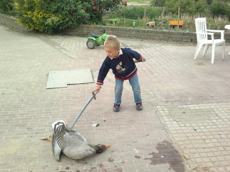 chasse à l'oie. 15052011