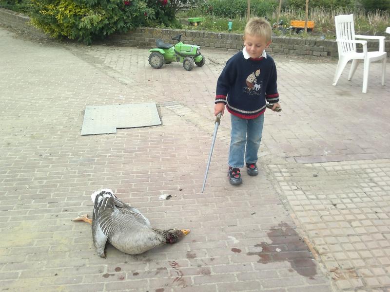 chasse à l'oie. 15052012