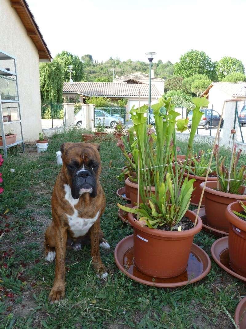 Photos 2011 P1000212