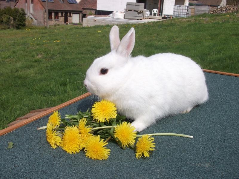 Ma lapine Bisou Photo_10