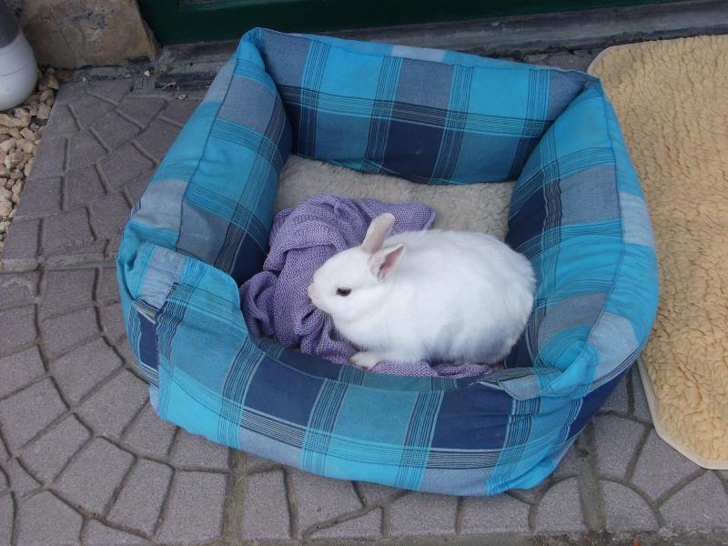 Ma lapine Bisou Photo_11