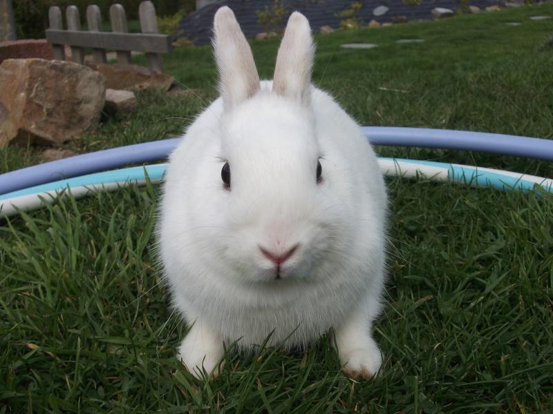 Ma lapine Bisou Photo_12