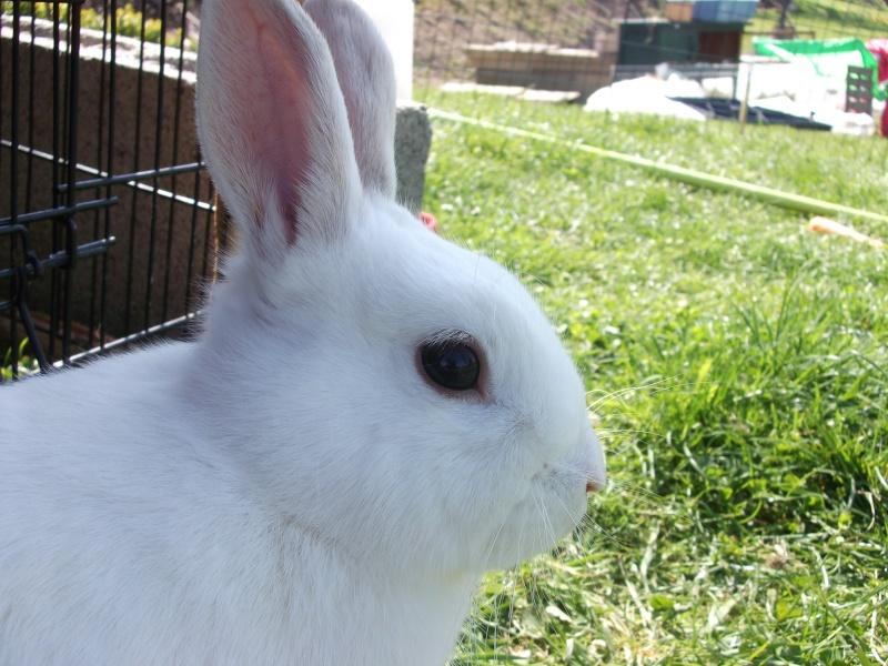 Ma lapine Bisou Photo_17