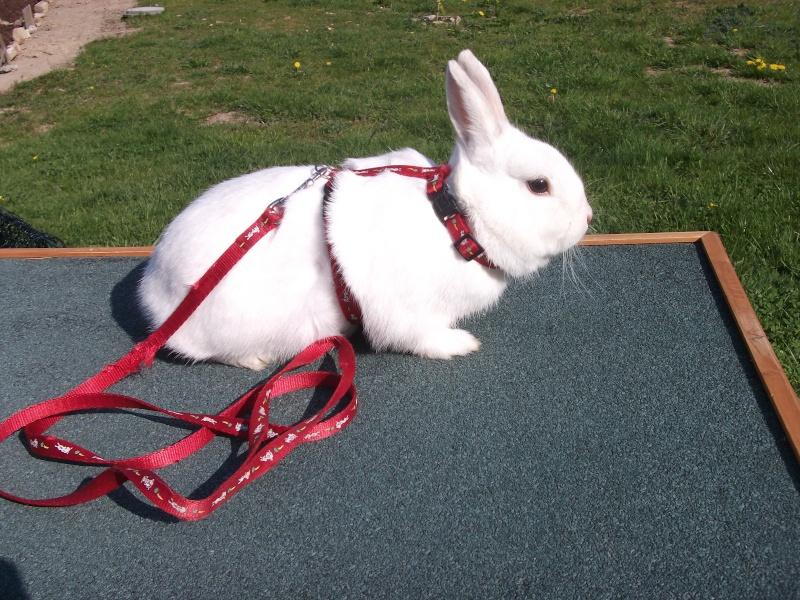 Ma lapine Bisou Photo_18