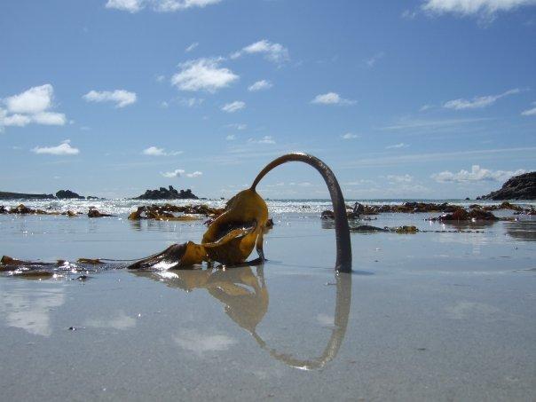 Photographie: Palmier aquatique à Porspoder Palmie10