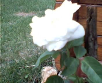 Mes fleurs d'hier et d'aujourd'hui Photo-12