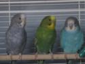 Évolution de mes petits oiseaux :) Img_9216