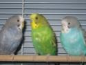 Évolution de mes petits oiseaux :) Img_9511
