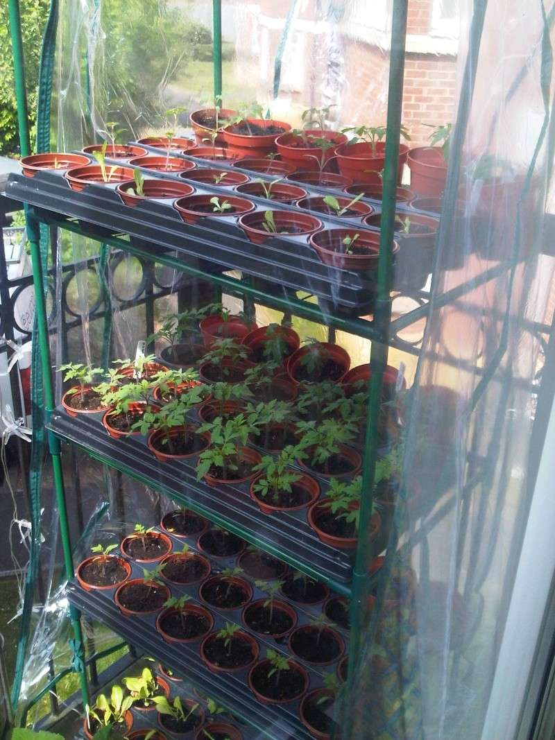Who is planting a garden this year? - Page 2 Img01010
