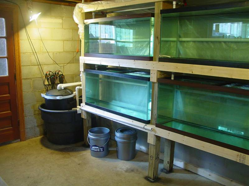 Breeder/ Grow out system  Sys210