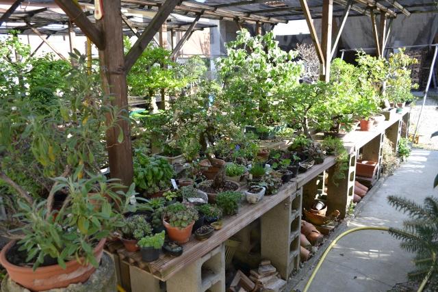Dove coltiviamo i nostri bonsai - Pagina 3 Dsc_0111