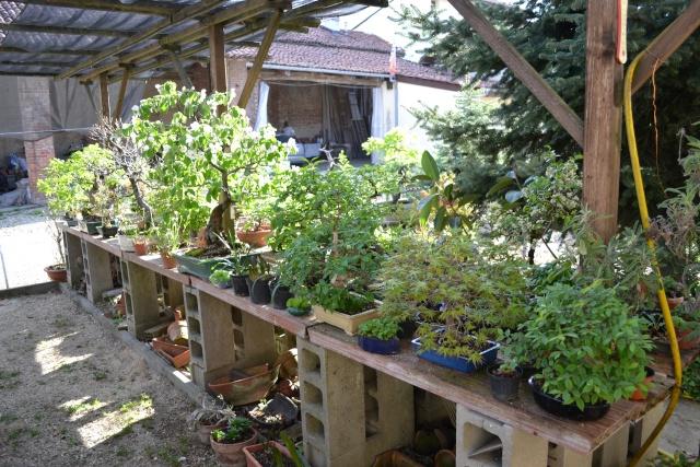 Dove coltiviamo i nostri bonsai - Pagina 3 Dsc_0112