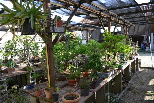 Dove coltiviamo i nostri bonsai - Pagina 3 Dsc_0113