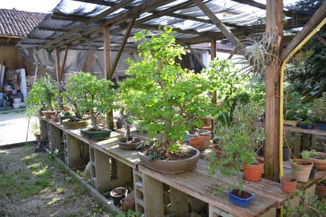 Dove coltiviamo i nostri bonsai - Pagina 3 Dsc_0114