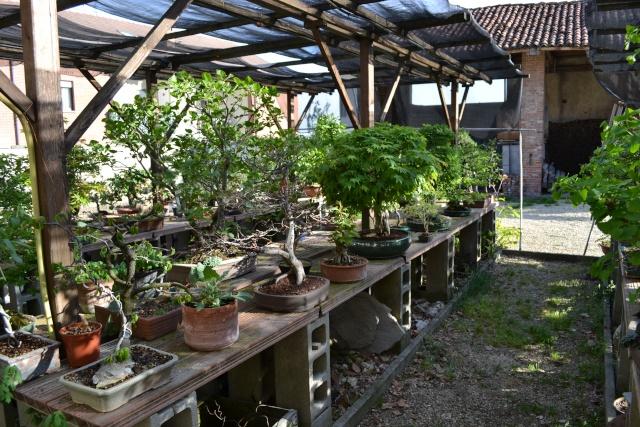 Dove coltiviamo i nostri bonsai - Pagina 3 Dsc_0115