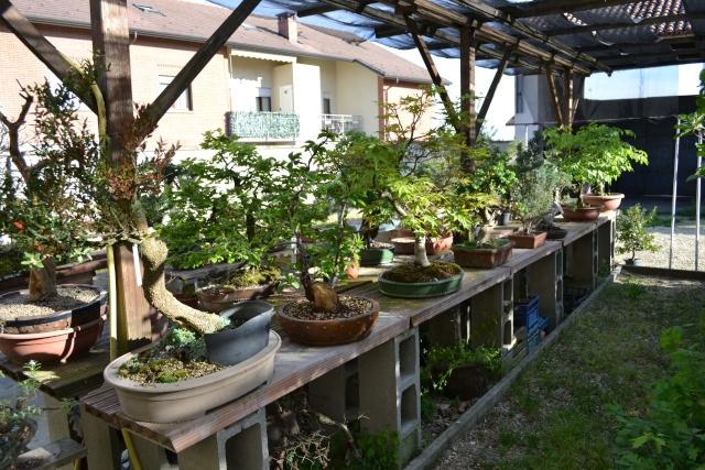Dove coltiviamo i nostri bonsai - Pagina 3 Dsc_0117