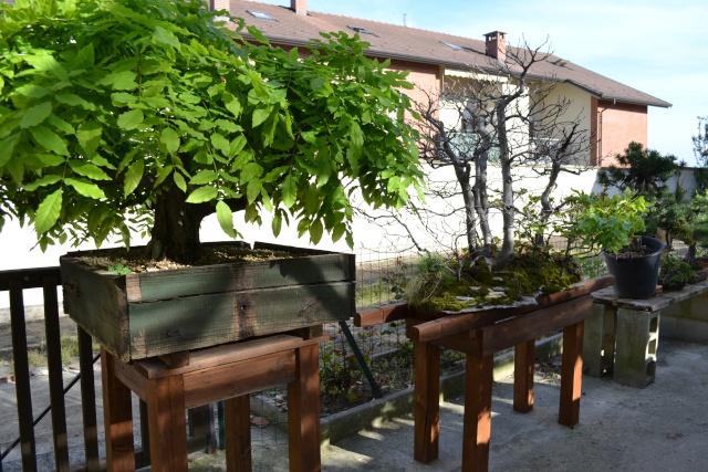 Dove coltiviamo i nostri bonsai - Pagina 3 Dsc_0118